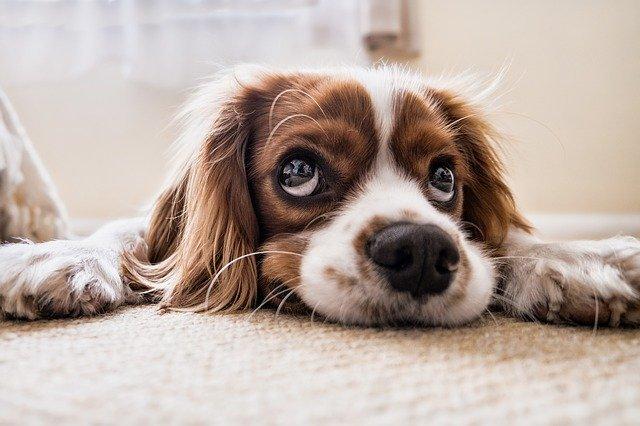 hundeangriff abwehren selbstverteidigung gegen hunde. Black Bedroom Furniture Sets. Home Design Ideas