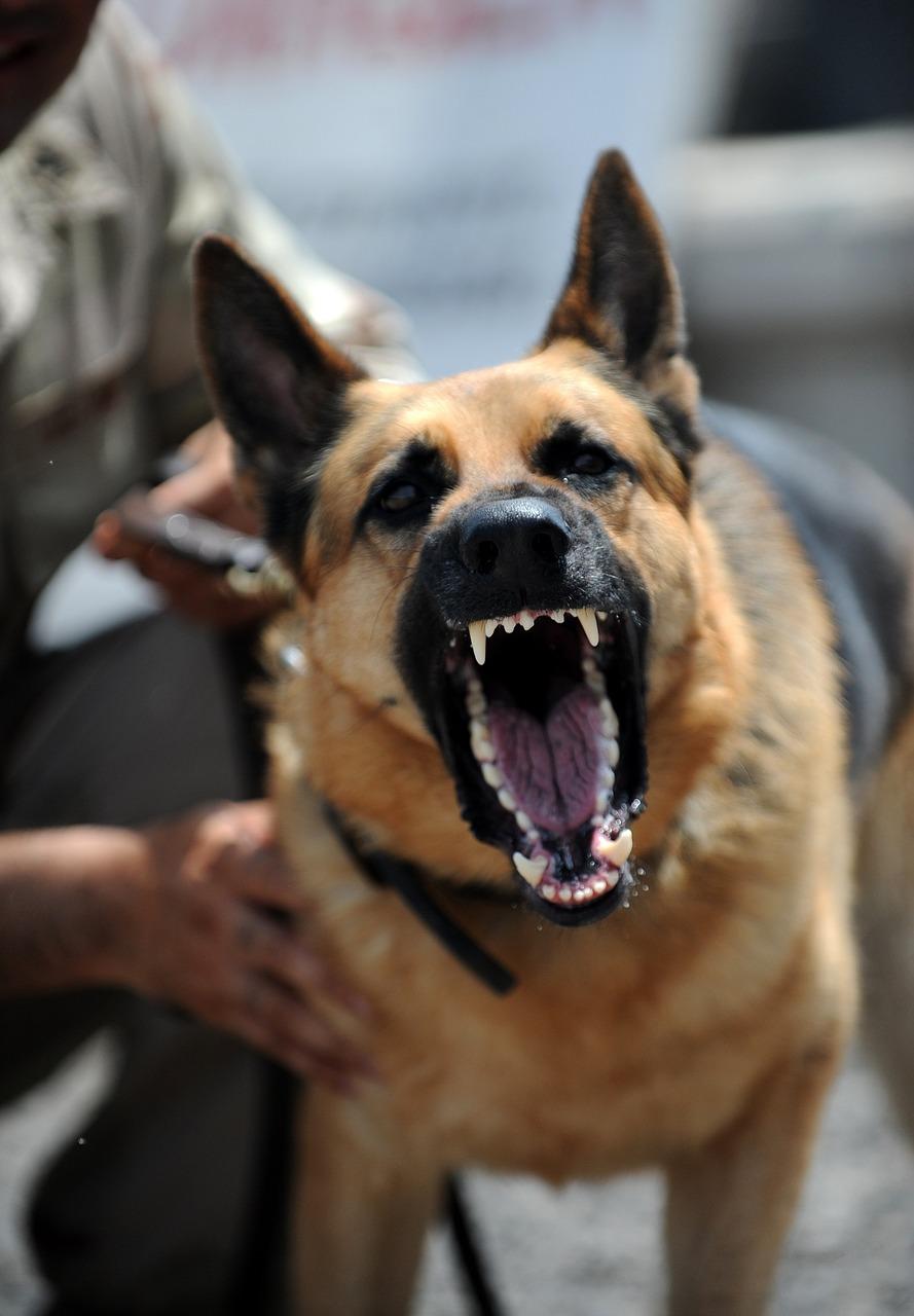 Hundeangriff abwehren